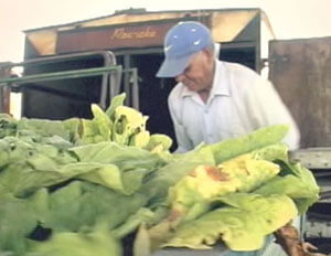 Don Candelario and a vegetable truck from The Guestworker, 2007.