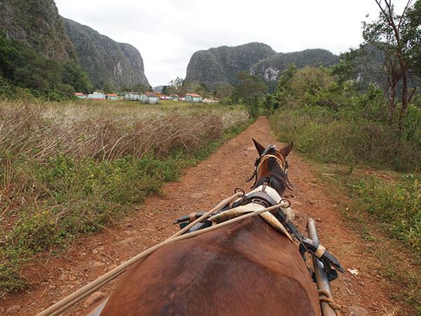 Charles D. Thompson, Jr., Viñales valley horse cart heading back to town, Viñales, Cuba, 2011.
