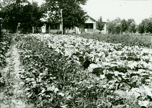 Photographer unknown, Old Stock garden, Baxter County, Arkansas, early 20th century. Courtesy University of Central Arkansas Archives, Butcher-Keller Collection.