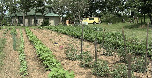 Zachariah McCannon, Old Stock Ozark garden, Newton County, Arkansas, 2007.