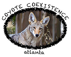Janet Kessler, Coyote coexistence Atlanta, 2009. Courtesy of Janet Kessler, CoyoteYipps.com.