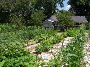 Brenda Smyth, Willodean's garden, Searcy County, Arkansas, July 2009.
