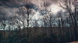 Timber acres, Winter's Bone, 2010.