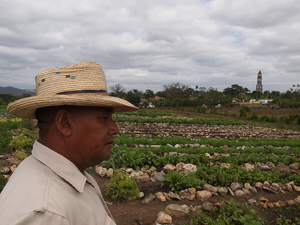 Charles D. Thompson, Jr., Pedro Rodriguez Pérez, Vice-President of the Organoponico Manaca Iznaga, looking over the vegetables he and nine other farmers grow for a living. In the background is the infamous tower in the Valle de los Ingeneros where slave owners overlooked their workers in fields. Trinidad, Cuba, December 2010.