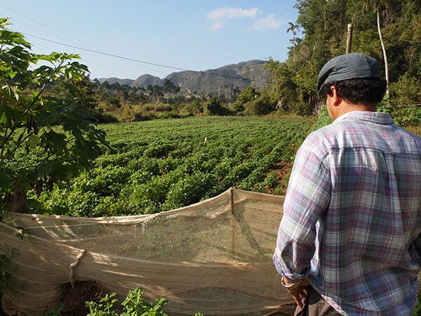 Charles D. Thompson, Jr., Humberto Ríos Labrada looks over a farm research plot. Pinar del Rio, Cuba, December 2010.