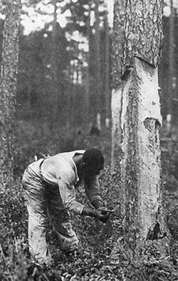 African American laborer chipping trees, outside Lockhart, Alabama. Forest History Society archive.