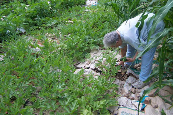 Brenda Smyth, Old chicken feed bags in garden with rocks on them as mulch, Searcy County, Arkansas, July 2009.