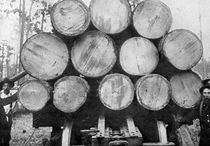 A log train with cut, stacked timber, near Lockhart, Alabama. American Lumberman 1907, Part 1, January–June 1907, Forest History Society archive.