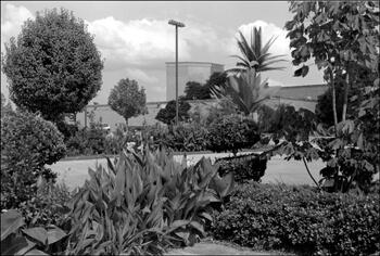 David Wharton, Landscaping, El Dorado Casino Resort, Shreveport, Louisiana.