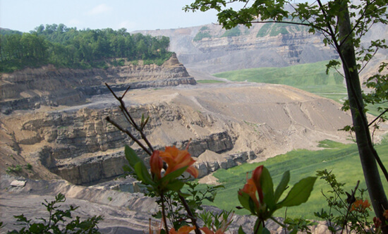 Denny Tyler, Native plants manage to survive on the fringes of the Edwight Mountaintop Removal site, Raleigh County, West Virgina, 2008.