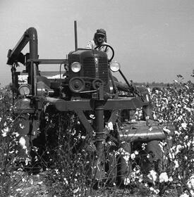 Marion Post Wolcott, Cotton picker in Clarksdale, Mississippi Delta, Mississippi, 1939.