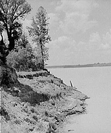 Marion Post Wolcott, Mississippi River near Perthshire, Mississippi Delta, 1940.