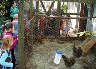 Allison O. Adams, Local kindergarteners visit an urban chicken coop, Decatur, Georgia, November 2009.