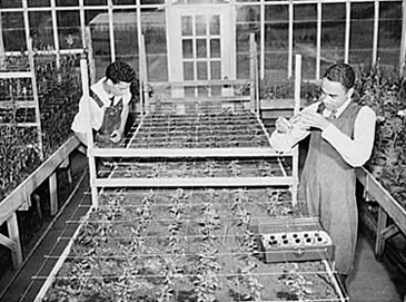 Arthur Rothstein, students in the greenhouse, Tuskegee Institute, Alabama, 1942. Library of Congress, Prints and Photographs Division, FSA-OWI Collection, LC-USW3- 000185-D.