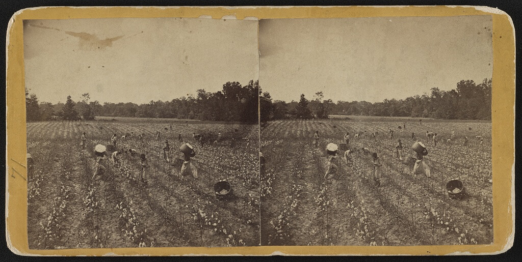 Stereograph of African Americans in a cotton field in Montgomery, Alabama, ca. 1860. Photograph by J.H. Holtzclaw. Courtesy of Library of Congress Prints and Photographs Division, https://www.loc.gov/resource/stereo.1s02973/