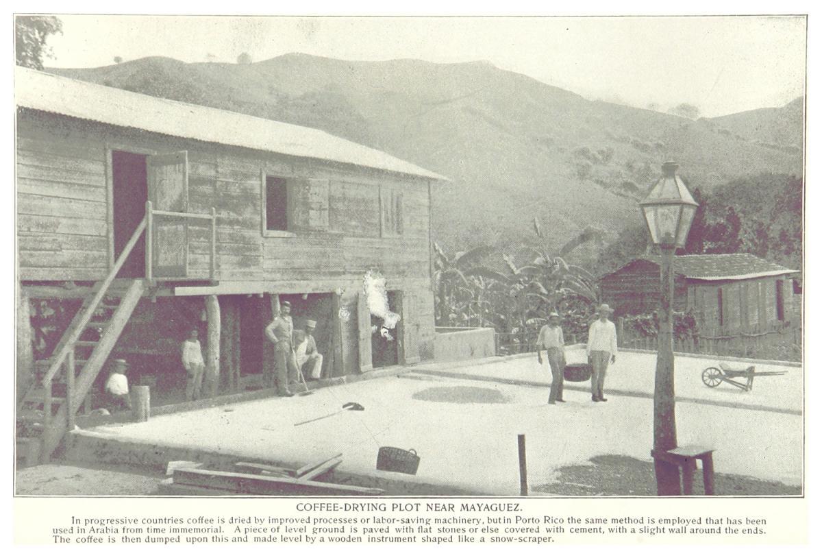 Coffee-Drying Plot near Mayaguez, Puerto Rico, 1899. Courtesy of Wikimedia Commons. Image is in public domain.
