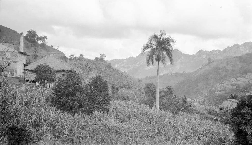 Utuado (Puerto Rico), coffee processing facility near sugar cane and orange trees, January 25, 1922.  Photograph by Robert S. Platt. Courtesy of the American Geographical Society Library, University of Wisconsin-Milwaukee Libraries.