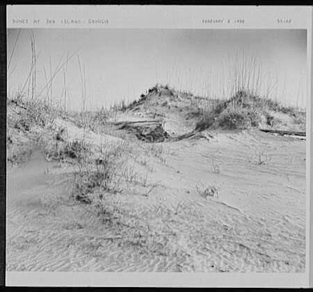 Dunes at Sea Island, Georgia, February 6, 1938. Photograph by Samuel H. Gottscho. Courtesy of The Library of Congress, Prints and Photographs Division, Gottscho-Schleisner Collection, digital ID http://loc.gov/pictures/resource/gsc.5a00119/.