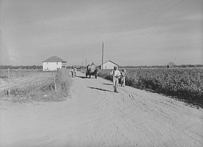 Wagonload of cotton coming out of the field in the evening. Mileston Plantation, Mississippi Delta, Mississippi, 1939. Photographic negative by Marion Post Wolcott. Library of Congress Prints and Photographs Division, FSA/OWI Black-and-White Negatives Collection, LC-USF34-052257-D.