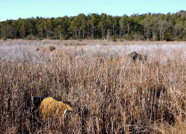 Christopher Reiger, Marsh love seat, Bull's Landing, Eastern shore of Virginia, 2005.
