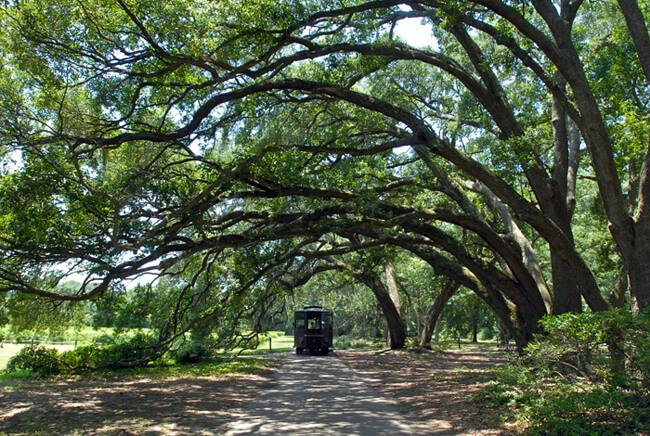 Kate Medley, Charleston tea plantation tour, Wadmalaw Island, South Carolina, 2009.