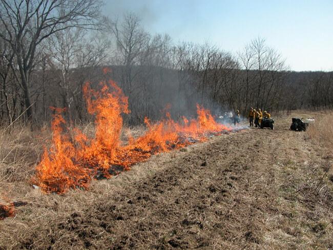 Steve Bishop, Prescribed fire, Nicholasville, Kentucky, 2005.