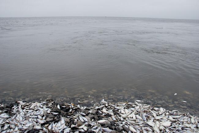 Stacy Kranitz, Fish, Isle de Jean Charles, Louisiana, 2010.