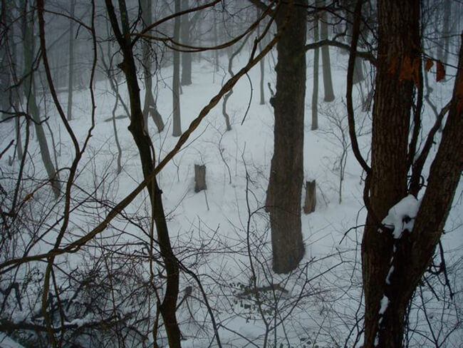 Tom Davenport, In the woods near home, Delaplane, Virginia, 2010.
