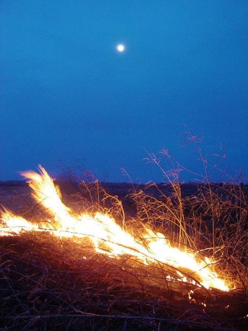 Michael Martin, Delta field fire, Dundee, Mississippi, 2006.
