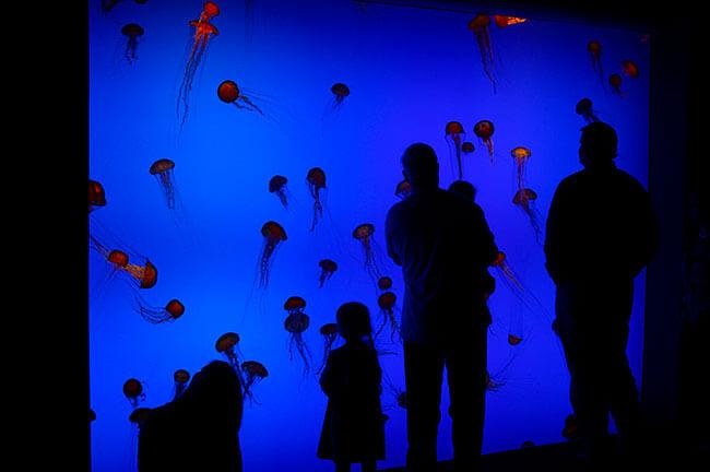 Shamus Warren, Jellyfish at the Georgia Aquarium, Atlanta, Georgia, 2007.