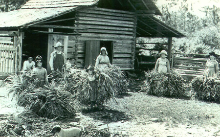 Francis Harper, The Chesser family putting fodder out to dry, Chesser's Island, Okefenokee Swamp, 1922.