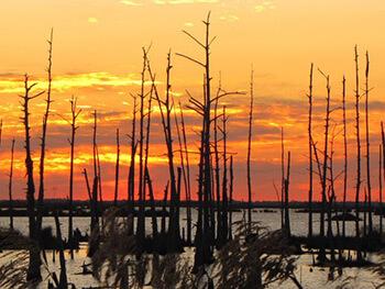 Saltwater Intrusion, Chauvin, Louisiana, 2013. Photograph by Kurt Lirette. Courtesy of photographer.