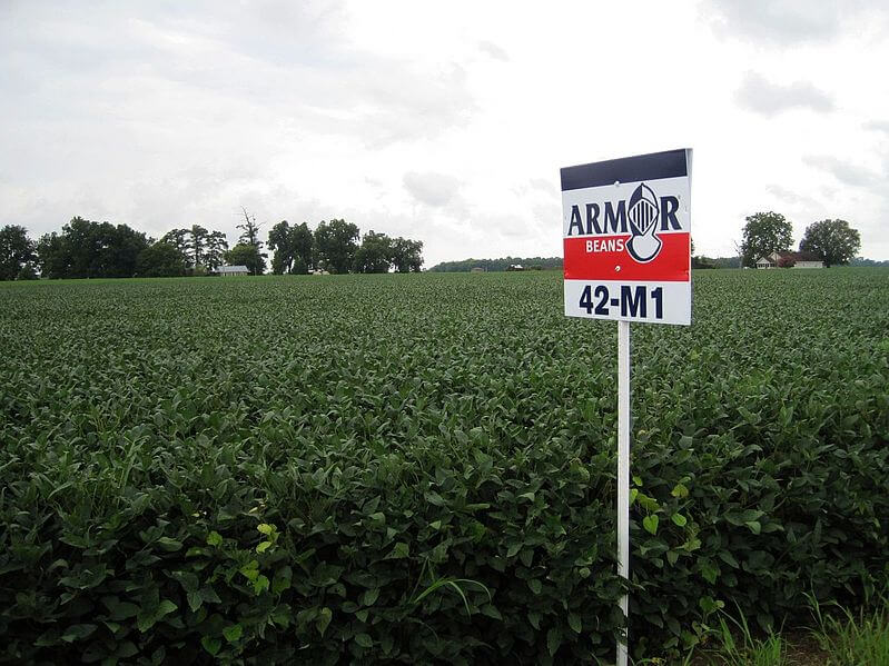 "A soybean field with a sign that reads ""Armor Beans"""