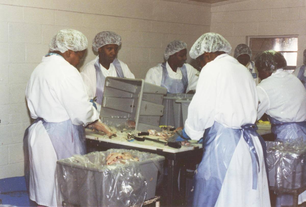 Employees wearing hairnets and aprons standing at a table processing catfish