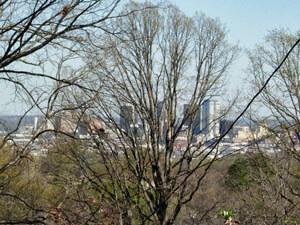 Birmingham skyline through the white oaks. Birmingham, Alabama, March 21, 2008. Photograph by Jon Smith.