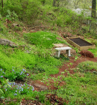 Start of the raised vegetable bed, with Virginia bluebells lining the path, Carolina silverbell and wildflower patch with Trillium cuneatum in foreground, Alabama snow-wreath left of the bench, and Rhododendron 'Maxecat' at bottom left corner. Birmingham, Alabama, March 30, 2008. Photograph by Jon Smith.