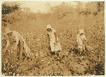 Figure 4. Campbell family picking cotton. Pottawotamie County, Oklahoma, 1916. Photograph by Lewis Hine. Child Labor Collection, Library of Congress, LOT 7475, v. 2, no. 4590.