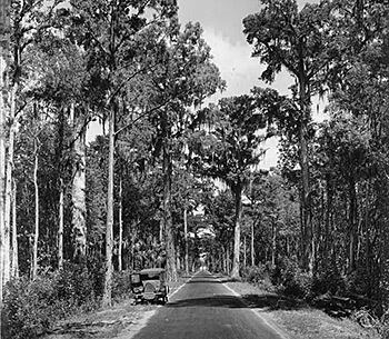 Dixie Highway in the Tampa Bay region. Photograph by the Burgert Brothers, 1925. Courtesy of Burgert Brothers Collection of Tampa Photographs and the University of South Florida Tampa Library, Florida Studies Center Gallery, Image 167.
