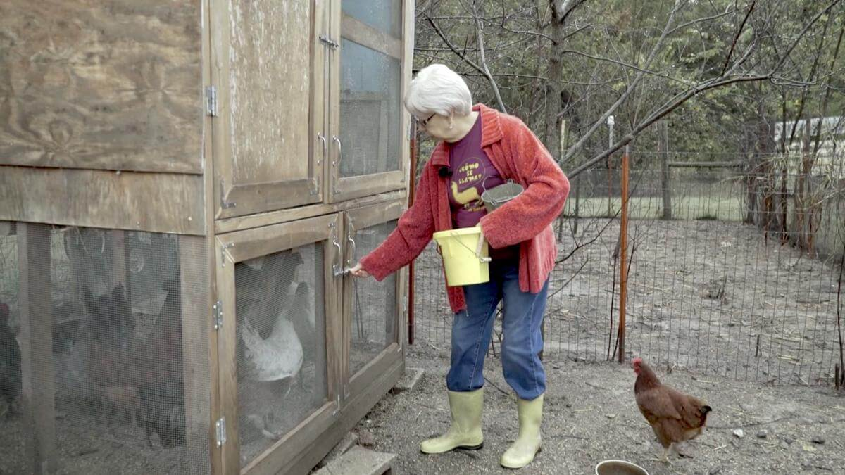 Rosemary McCombs Maxey feeding her chickens, Dustin, Oklahoma, 2015. Screenshot from Hearing the Call courtesy of Southern Spaces.