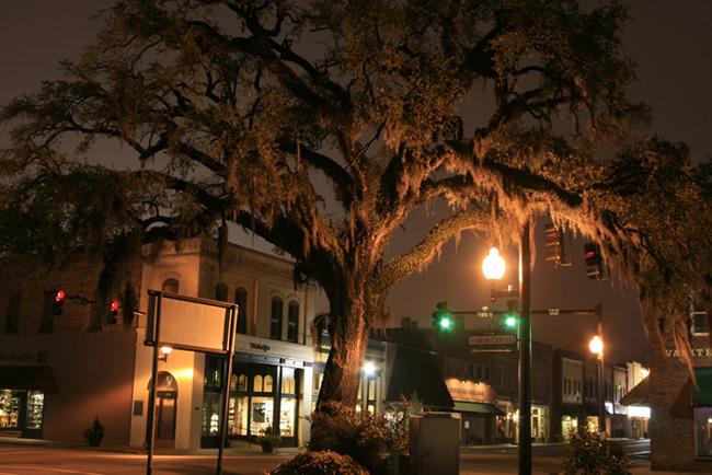 Tyler Farwell, Old oak, Conway, South Carolina, 2008.